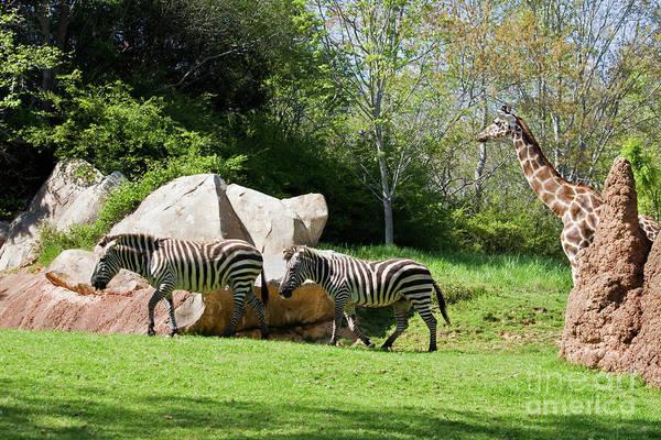 Photograph - Zoo Animals by Jill Lang