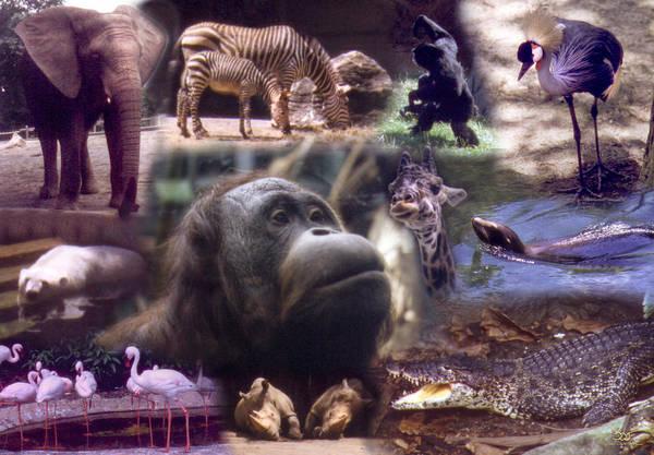 Photograph - Zoo Animals by Sam Davis Johnson