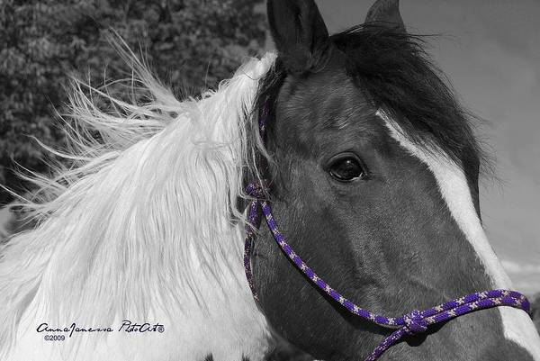 Photograph - Zorro by AnnaJanessa PhotoArt