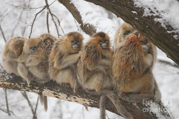 Photograph - 00444264.jpg by Xi Zhinong