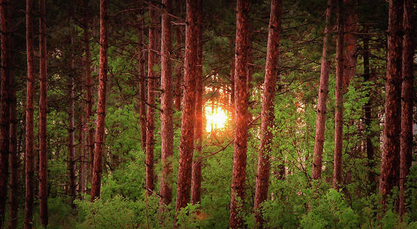 Photograph - 010 - Pine Sunset by David Ralph Johnson