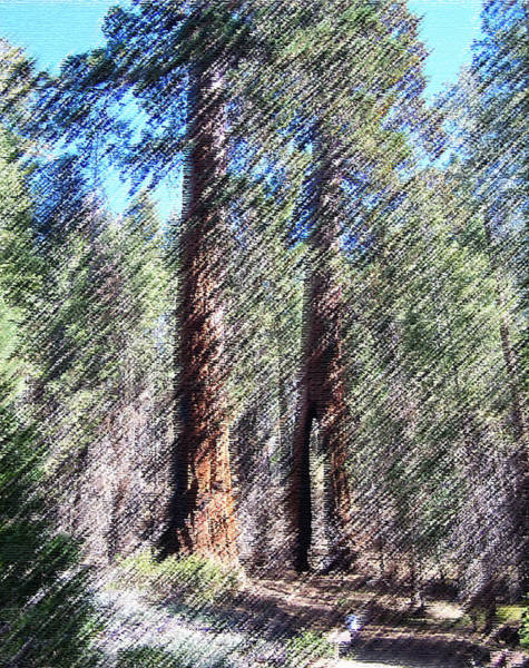 Digital Art - 010219 Red Woods California by Garland Oldham