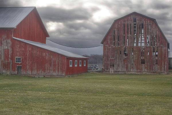 Photograph - 0240 - Church Road Reds by Sheryl L Sutter