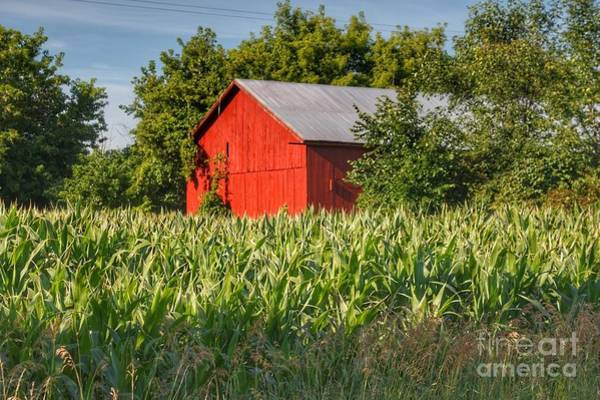 Photograph - 0190 - Willard Road Red by Sheryl L Sutter