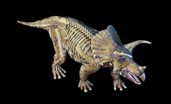 Wall Art - Photograph - 3d Rendering Of Triceratops by Leonello Calvetti
