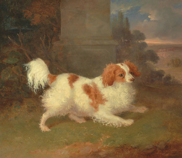 Painting - A Blenheim Spaniel by William Webb