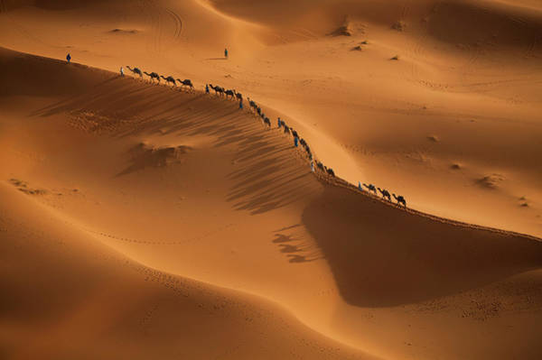Photograph - A Caravan Of Camel Merchants, Rider And by Mint Images - Art Wolfe