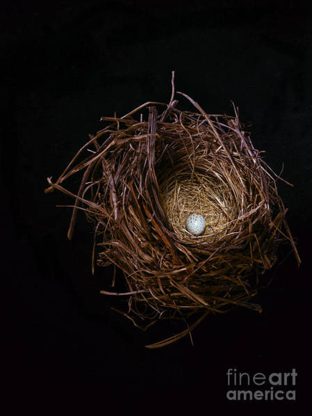 Photograph - A House Sparrow Nest And Egg. by Rebecca Hale
