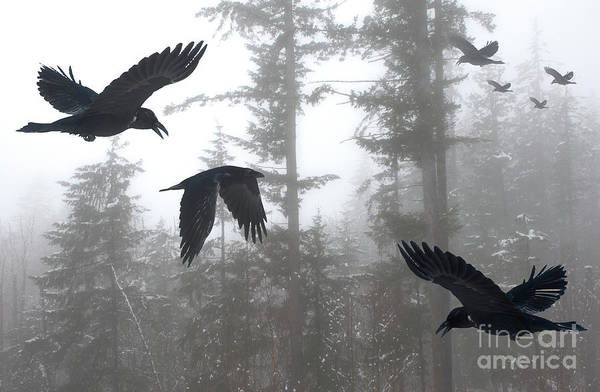 Wall Art - Photograph - A Murder Of Crows by Bob Christopher