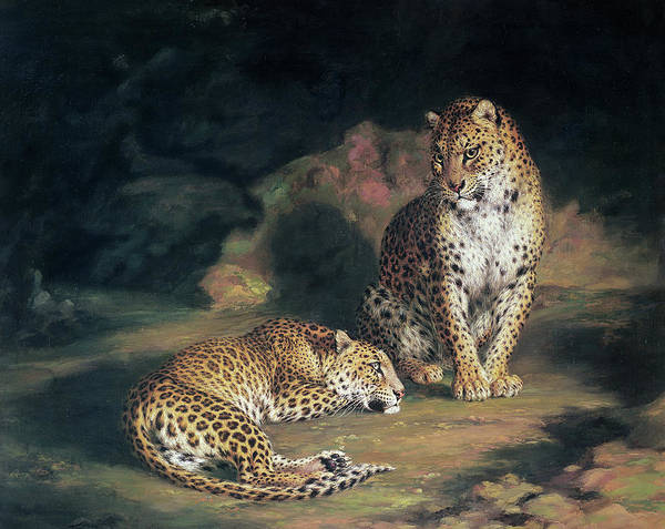 Wall Art - Painting - A Pair Of Leopards by William Huggins