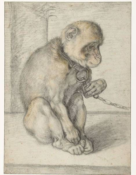 Baby Gorilla Painting - A Seated Monkey On A Chain, Hendrick Goltzius, 1592 - 1602 by Hendrick Goltzius