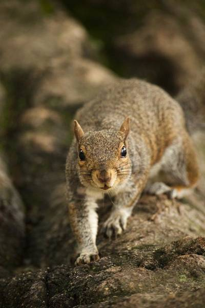 Wall Art - Photograph - A Tree Squirrel by Rachel Morrison