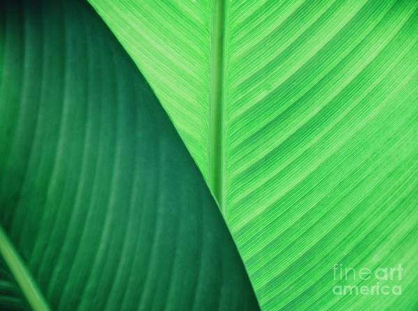 Photograph - Abstract Natural Leaves Background. by Jelena Jovanovic
