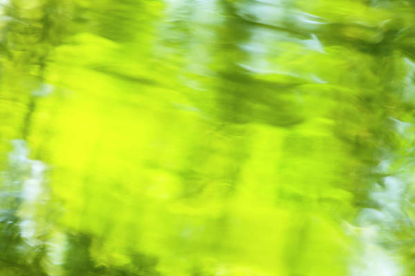 Wall Art - Photograph - Abstract Of Blurred Trees And Water by Stuart Westmorland