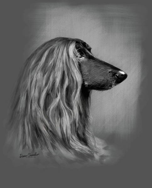 Digital Art - Afghan Hound by Diane Chandler