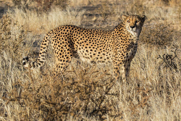 Wall Art - Photograph - Africa, Namibia, Keetmanshoop by Hollice Looney