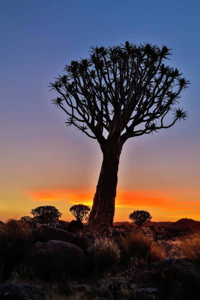 Wall Art - Photograph - Africa, Namibia, Keetmanshoop, Sunset by Hollice Looney