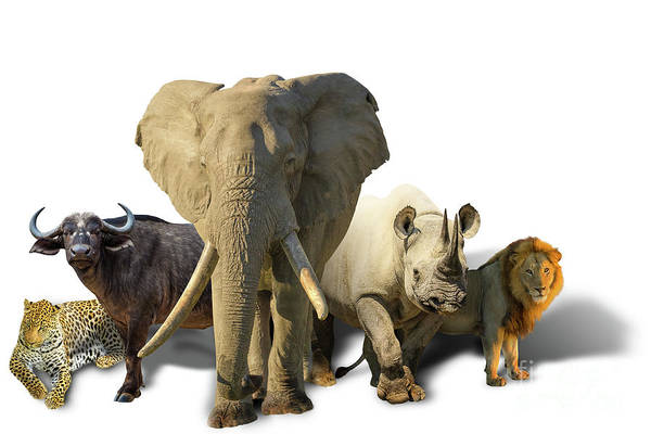 Photograph - African Big Five Isolated by Benny Marty
