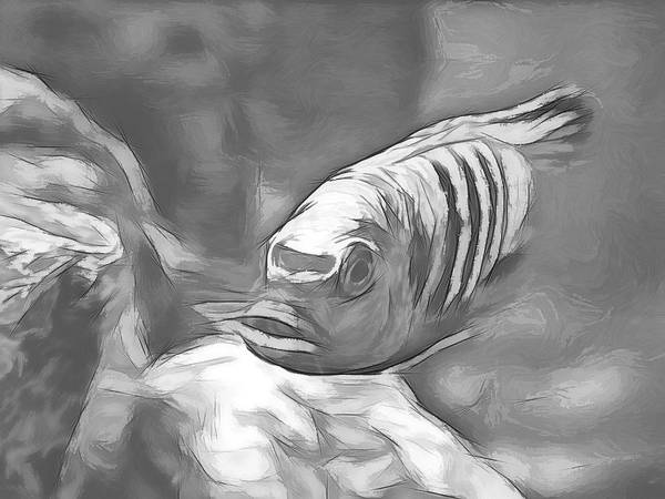 Digital Art - African Cichlid Blue Zebra Sketch by Don Northup