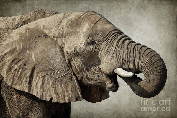 Digital Art - African Elephant by Angela Doelling AD DESIGN Photo and PhotoArt