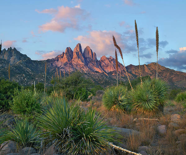 Photograph - Agave, Organ Mts, Aguirre Spring Nra by