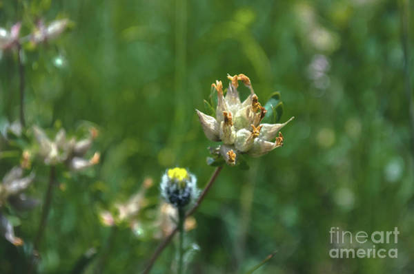 Wall Art - Photograph - Alpine Flowers by Michelle Meenawong