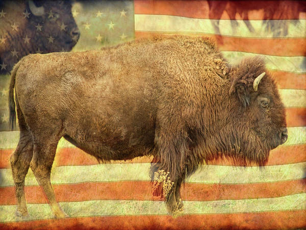Photograph - American Buffalo by James BO Insogna