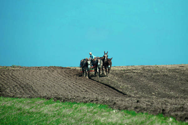 Wall Art - Photograph - Amish Farmer - Lancaster County by Bill Cannon