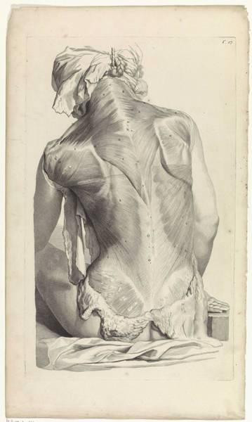 Liver Painting - Anatomical Study Of The Back Of A Woman, Pieter Van Gunst, After Gerard De Lairesse, 1685 by Gerard de Lairesse