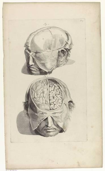 Liver Painting - Anatomical Study Of The Head, Pieter Van Gunst, After Gerard De Lairesse, 1685 by Gerard de Lairesse