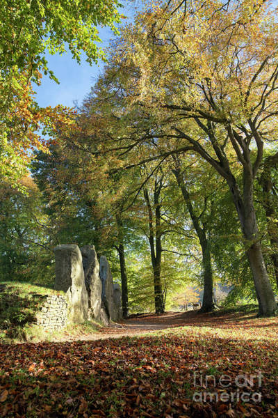 Photograph - Wayland's Smithy Long Barrow In Autumn by Tim Gainey