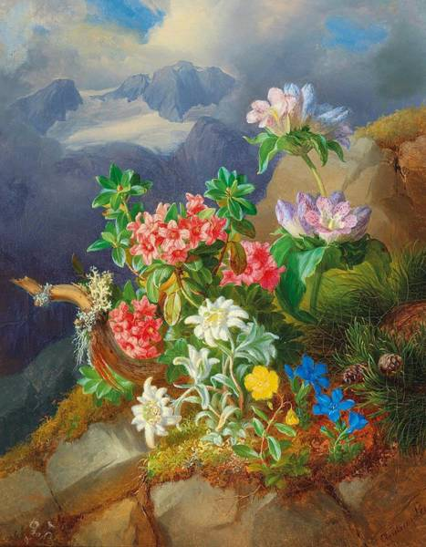 Wall Art - Painting - Andreas Lach Eisgrub 1817-1882 Vienna Alpine Flowers, In The Background The Dachstein Massif by Andreas Lach