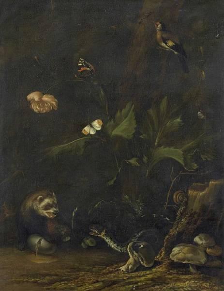 Panda Drawing Painting - Animals And Plants, Anthonie Van Borssom, 1650 - 1677 by Anthonie van Borssom