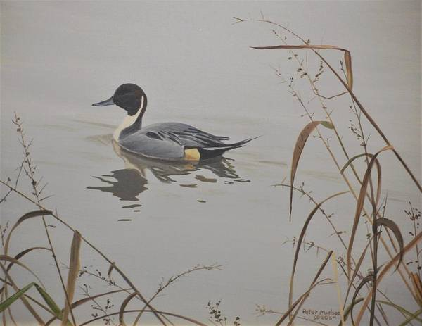 Painting - Ankeny Pintail by Peter Mathios