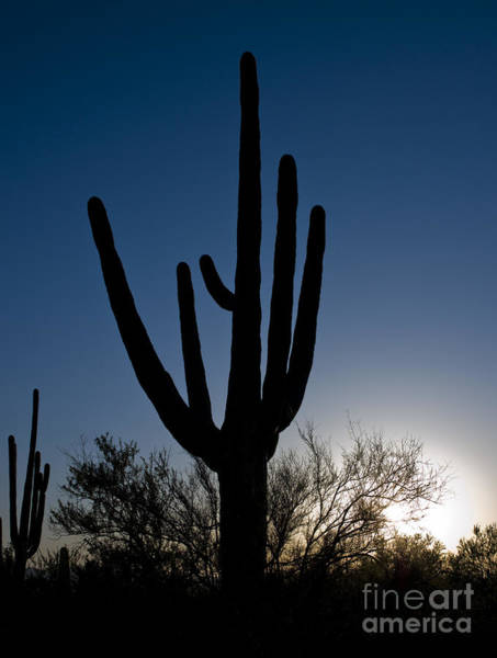 Photograph - Arizona Cacti, 2008 by Carol Highsmith