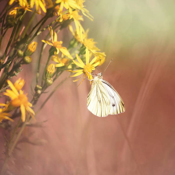 Photograph - Around The Meadow 3 by Jaroslav Buna