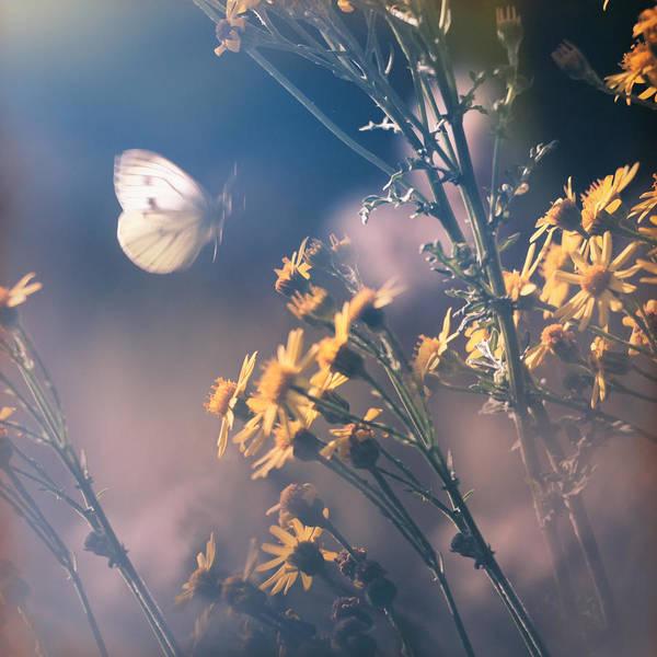 Photograph - Around The Meadow by Jaroslav Buna