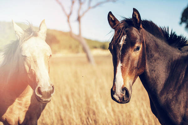 Photograph - Australian Horses In The Paddock by Rob D Imagery