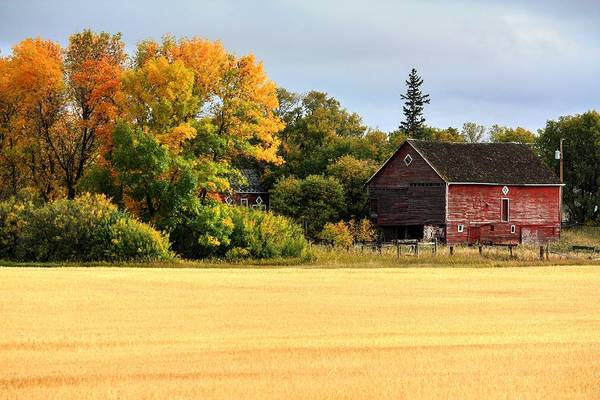 Photograph - Autumn Barn by David Matthews