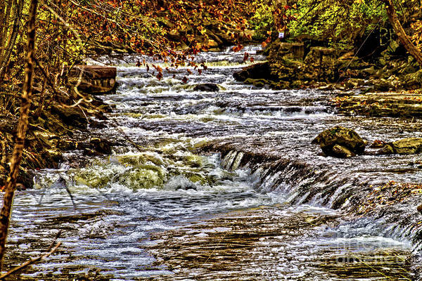 Wall Art - Photograph - Autumn By The Creek by William Norton