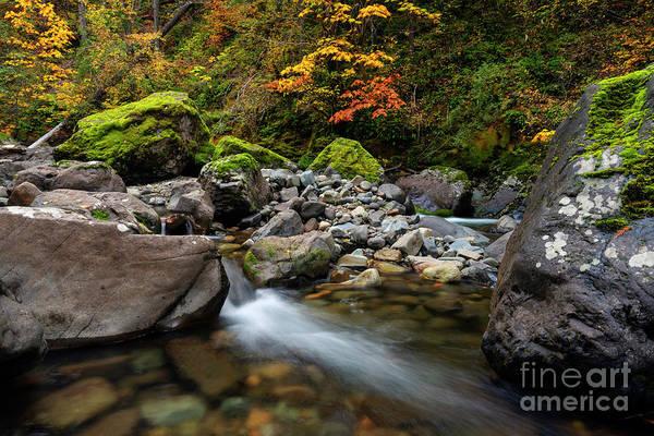 Wall Art - Photograph - Autumn Clear by Mike Dawson