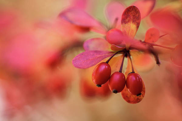 Indian Photograph - Autumn Colors by Nailia Schwarz