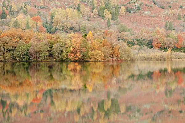 Autumn Colours Reflecting Into Grasmere Art Print