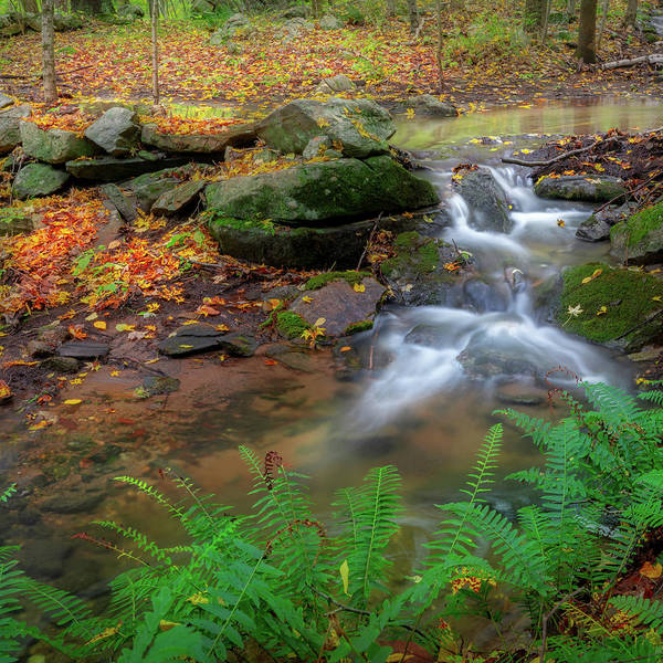 Photograph - Autumn Falling Square by Bill Wakeley