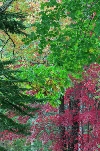 Mount Desert Island Photograph - Autumn Forest Colors In Maine by Jerry Whaley