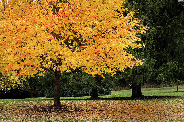 Photograph - Autumn Gold by Don Johnson