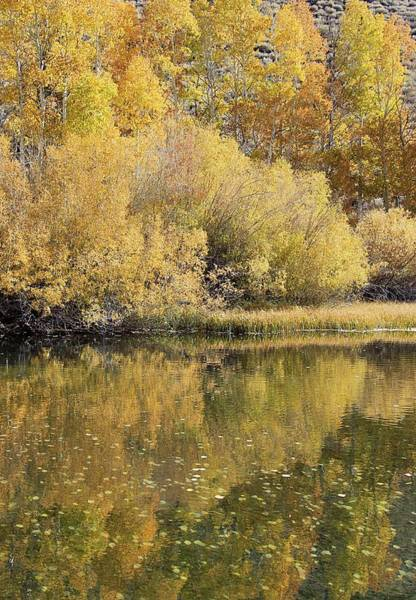 Photograph - Autumn Immersion  by Sean Sarsfield