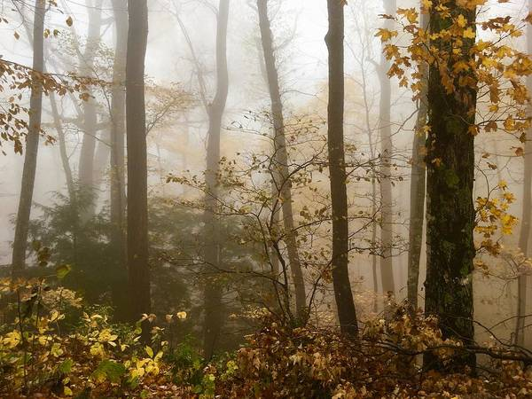 Wall Art - Photograph - Autumn In The Smokies by Kevin Wheeler