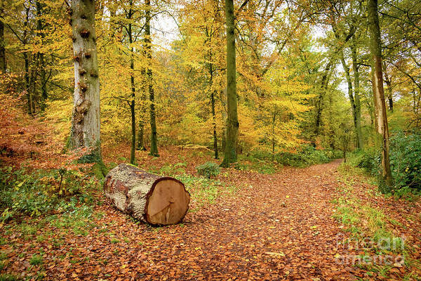 Photograph - Autumn In The Woods by Colin Rayner