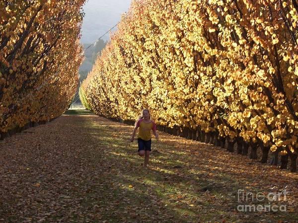 Photograph - Autumn by Joyce Woodhouse
